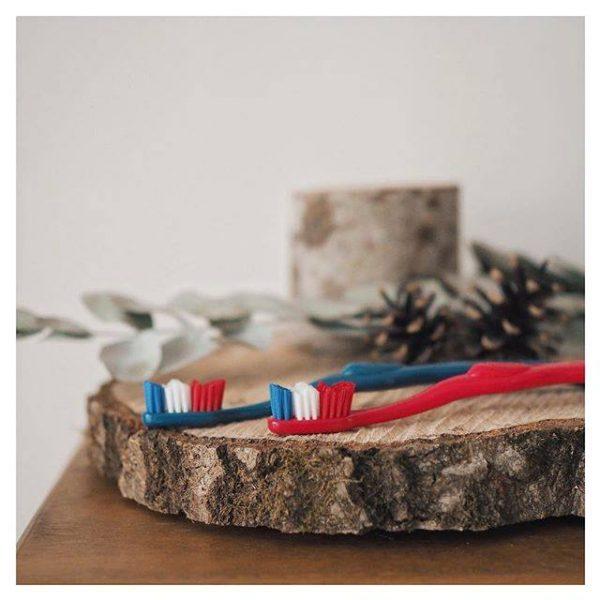 Deux brosses à dents aux couleurs bleu blanc rouge psées sur un tronc d'arbre pour le petit je ne sais quoi